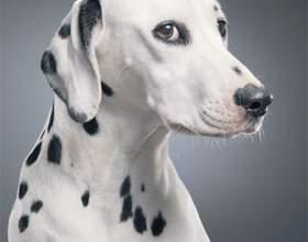 Как фотографировать собаку фото