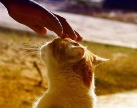 Как гладить кошку фото