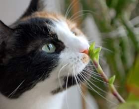 Как отвадить кошку фото