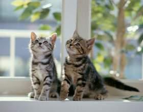 Как характер кошки зависит от породы фото