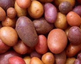 Как хранить картошку на балконе фото