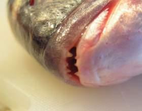Как хранить красную рыбу фото
