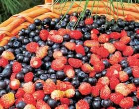 Как хранить лесные ягоды фото