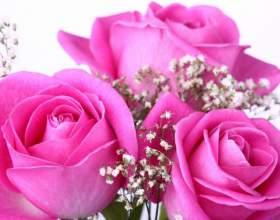 Как хранить розы фото