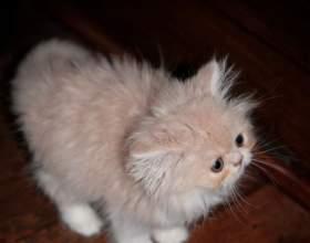 Как воспитать котенка ласковым фото
