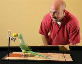 Как играть с попугаем фото