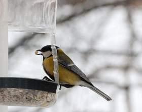 Как помочь птицам пережить холода: особенности кормления городских птиц фото