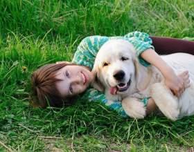 Как избавиться от аллергии на животных фото
