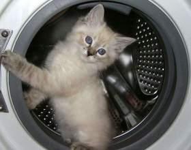 Как избавиться от плесени в стиральной машине фото