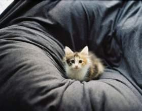 Как избавиться от запаха кошачьей мочи на диване фото