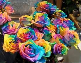 Как изменить цвет роз фото