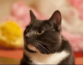 Как кастрировать кота фото