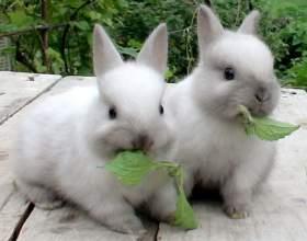 Как кормить декоративных кроликов фото