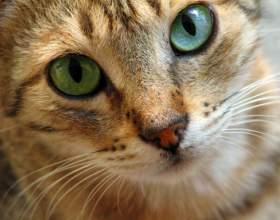 Как кормить и ухаживать за кошками фото