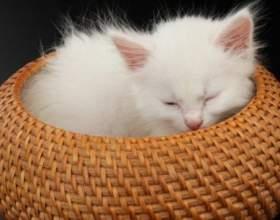 Как кормить котенка с пипетки фото