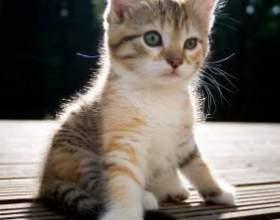 Как кормить котенка в 3 месяца фото