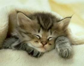 Как выходить слабого котенка фото