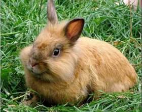Как кормить крольчат фото