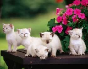 Как кормить котят без кошки фото