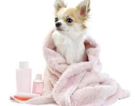 Как мыть собаку фото