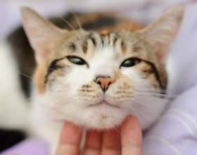 Как кошки мурлыкают фото