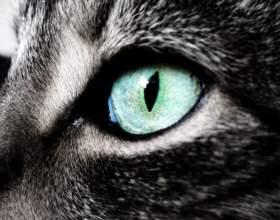 Как кошки видят мир фото