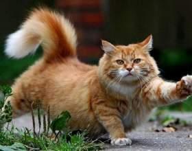 Как кошку посадить на диету фото