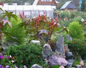 Как красиво рассадить в огороде цветы фото
