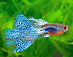 Как лечить аквариумных рыбок фото