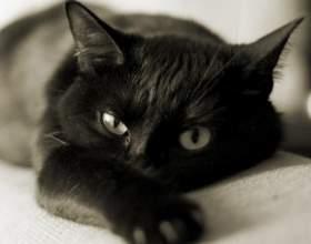 Как лечить кошку фото