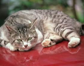 Как лечить отравление у кота фото