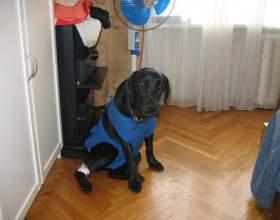 Как поставить капельницу собаке фото