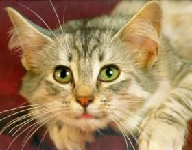 Как определить лишай у кошек фото