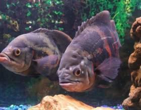 Как лечить рыб фото