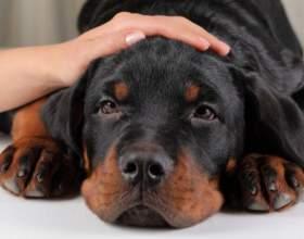 Как промыть желудок собаке фото