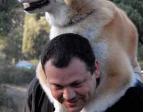 Как любить свою собаку фото