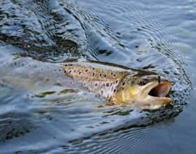 Как ловить речную форель фото