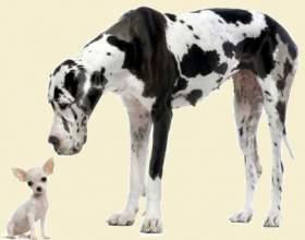 Как лучше назвать большую собаку фото