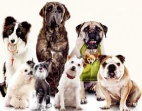 Как дать собаке имя фото