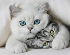 Как лучше назвать взрослую кошку фото