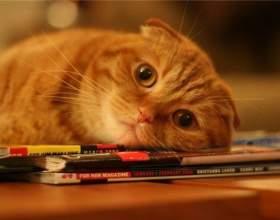 Как меняется поведение кошки после стерилизации фото