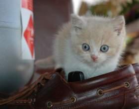 Как воспитать ласкового котенка фото