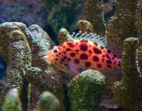 Как установить фильтр аквариумный фото