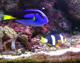 Как менять воду у рыбок фото
