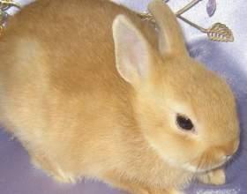 Как узнать породу кролика фото