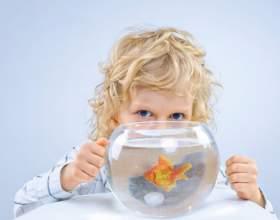 Как мыть аквариум фото
