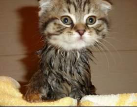 Как мыть маленького котенка фото