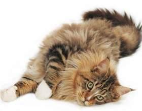 Как мыть кошкам уши фото