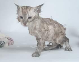 Как мыть кошку фото