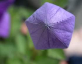 Как начертить пятиугольник при помощи циркуля фото